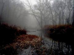 Night Creek